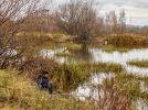 Инспектируем на SKODA Octavia и Kodiaq нижегородские усадьбы  - фотография 22
